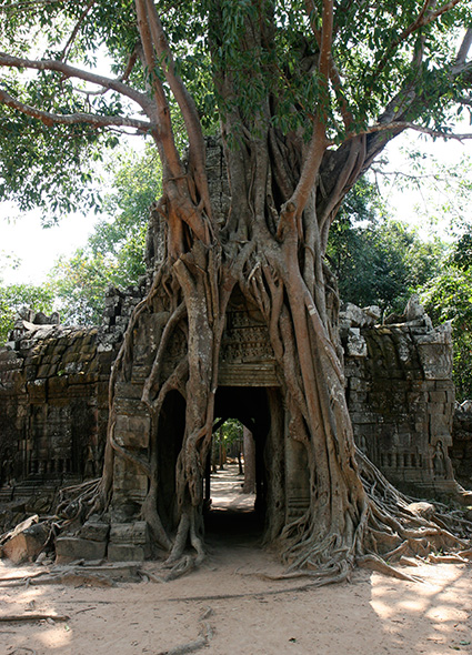 angkor-tree