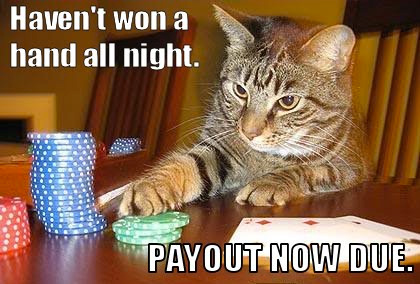 cat-gambler