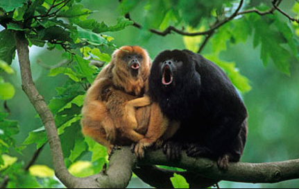 howler-monkey-amazon-rainforest-global-warming-deforestation-endangered