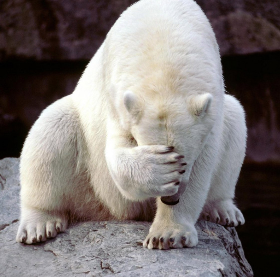 polar-bear-facepalm