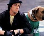 Sylvester Stallone's Dog Days