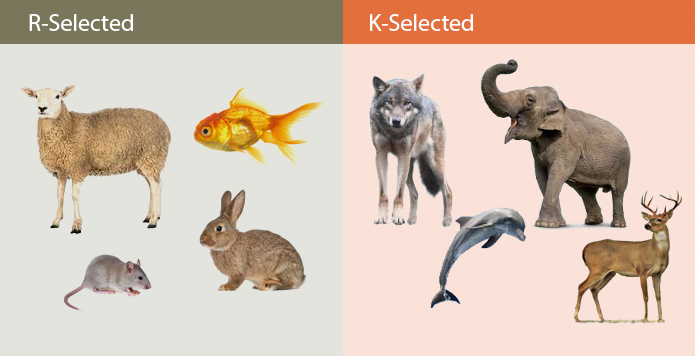 r-selected-k-selected-species-sexual-politics