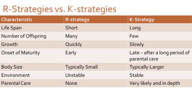 rk-strategy-attribute-chart-characteristics