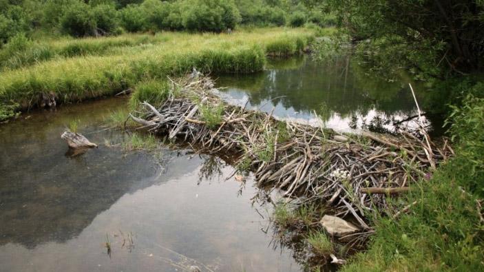 beaver-dam-pennsylvania-letter