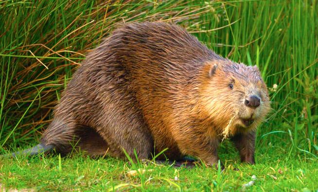beaver-funny-letter-epa-damn-farmer